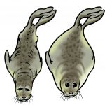 foca magra vs. boa condição física