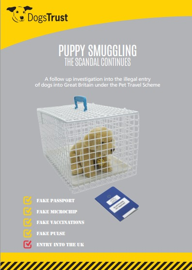Puppy Smuggling: The Scandal Continues