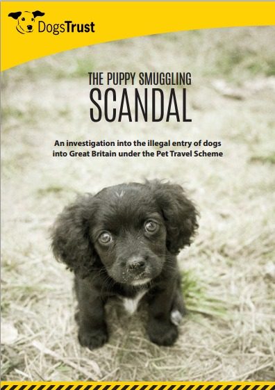The Puppy Smuggling Scandal