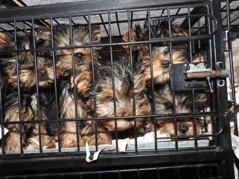 Call for an Action Plan to tackle the illegal trade in dogs and cats in the EU