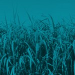Forest Research & E.ON to lead ETI project on characterising UK grown bioenergy feedstocks