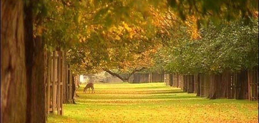 Bushy Park 10Km
