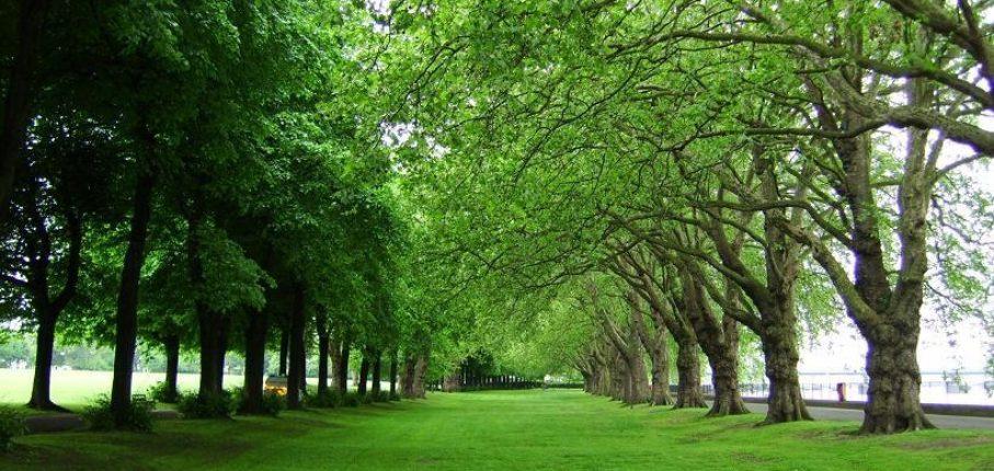 Wandsworth Park 10Km