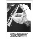 Polar Bear Polonaise Greetings Card