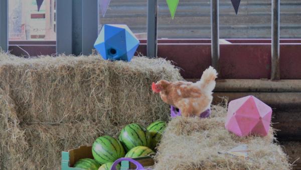 Open Day Hen On Bale