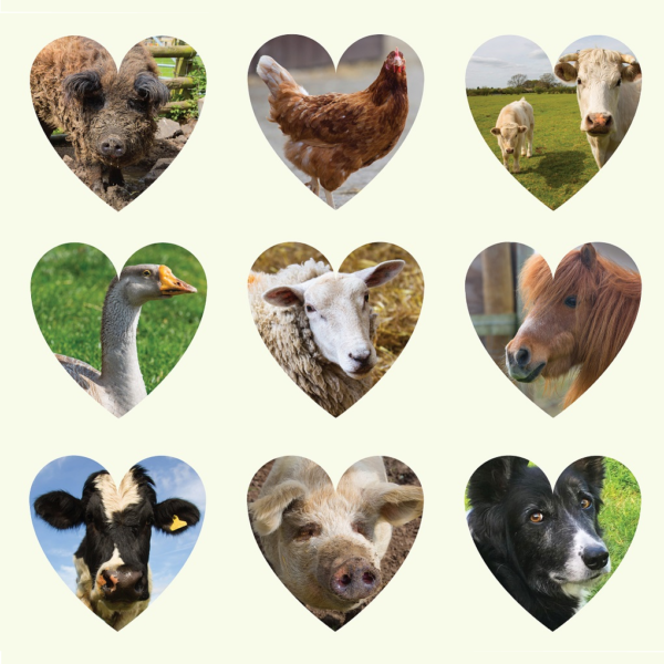 Gh Heart Animals