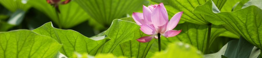 9 healings heading