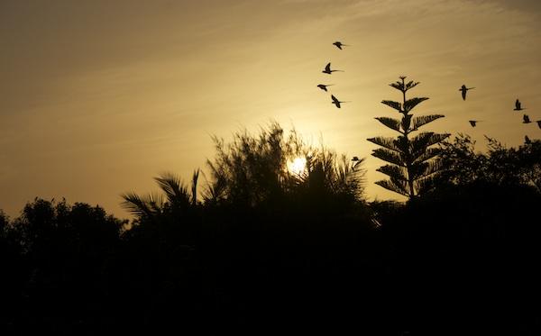 Vogelschwarm über Penukonda, Indien