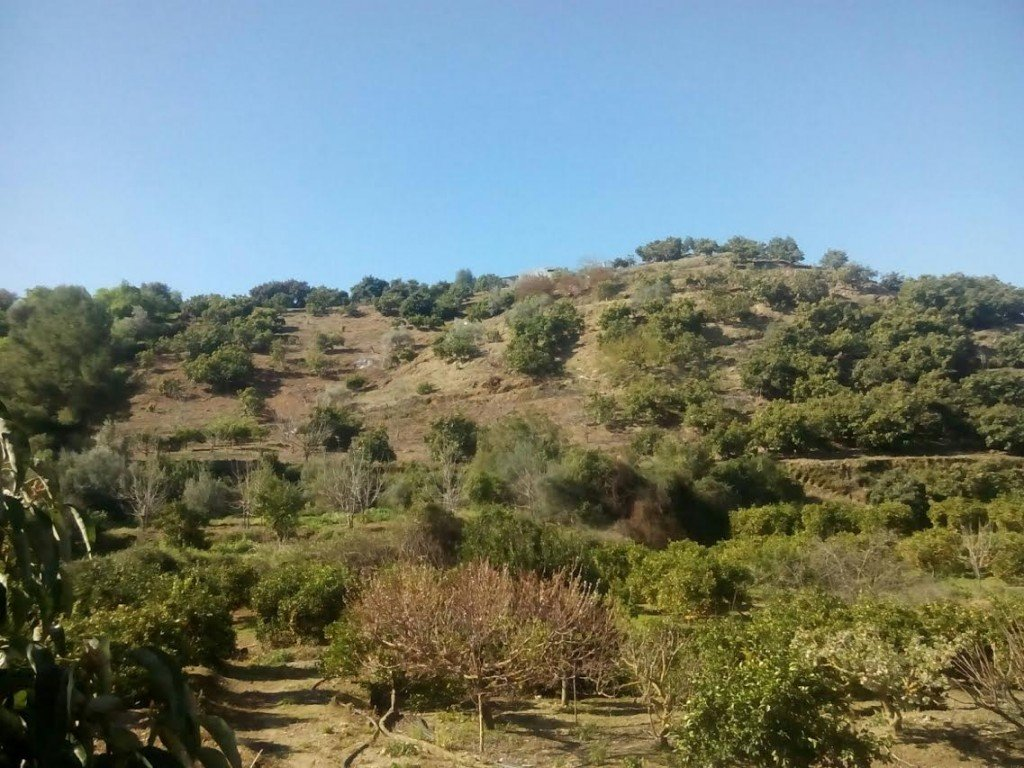 0-bed- plot for Sale in Coin