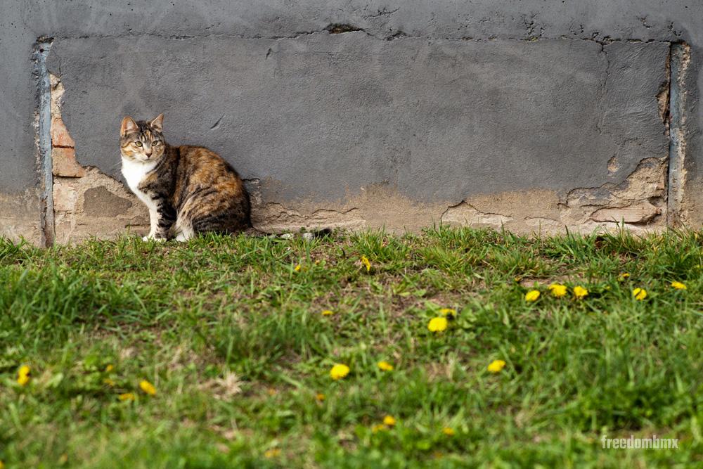 Katze freedombmx Springbreak