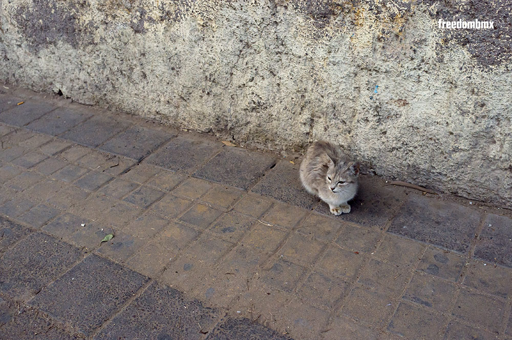 GegenÜber-DEV-Marokko