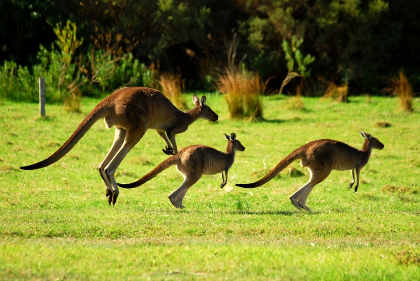 The wildlife is another major reason gap years in Australia are so popular... Photo: iStock