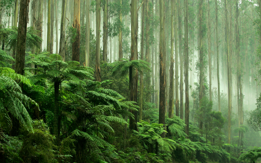Where the forests are deep and the deserts are long...  Photo: iStock