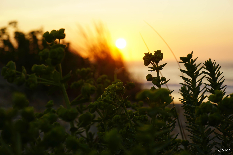 Soesto Sunset
