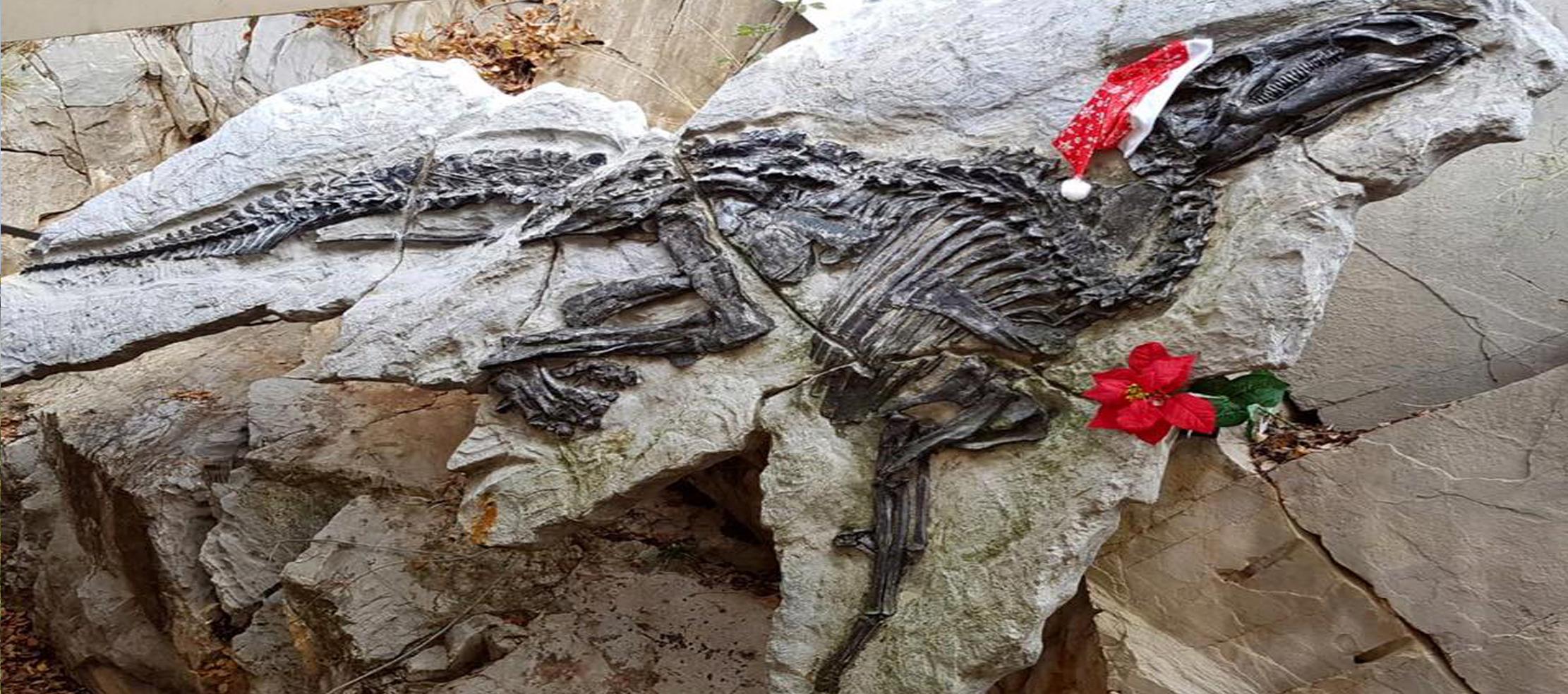 Antonio il dinosauro 19 12 16