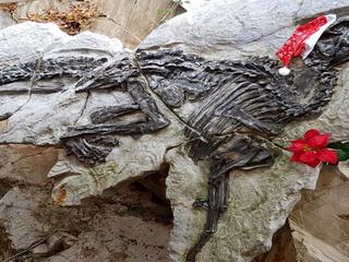 Show antonio il dinosauro 19 12 16