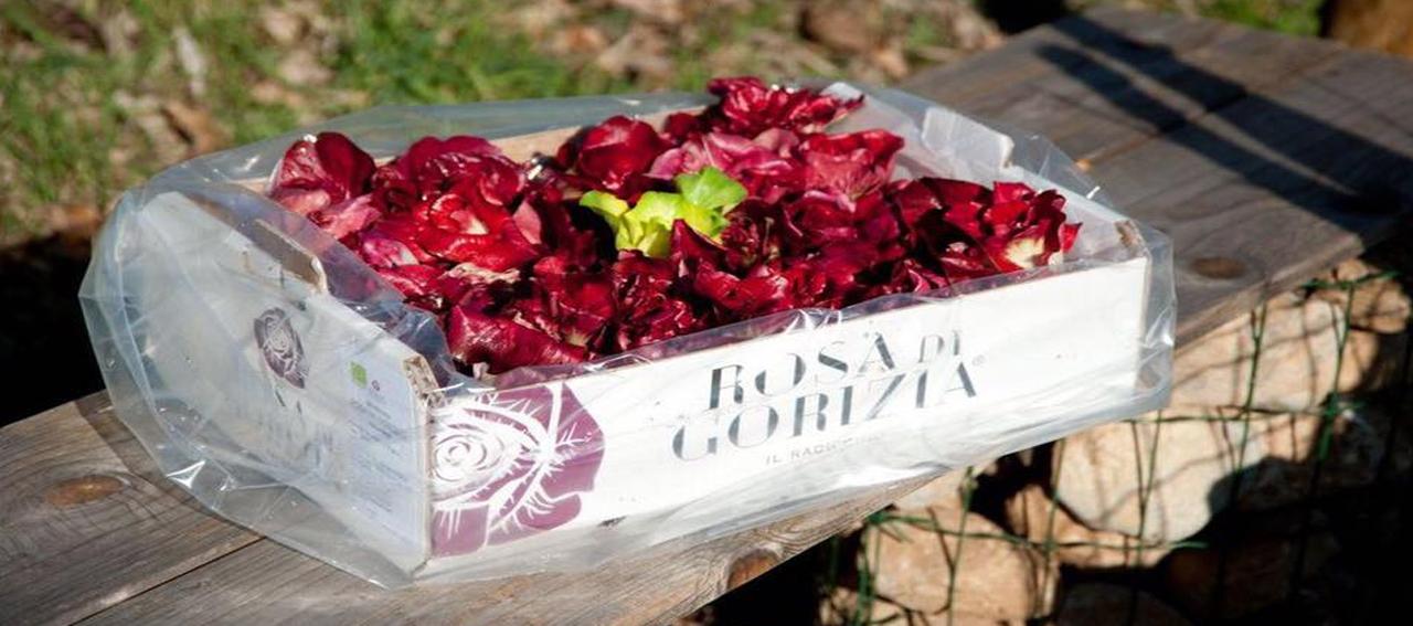 Rosa gorizia 24 01 17