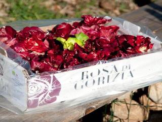 Show rosa gorizia 24 01 17
