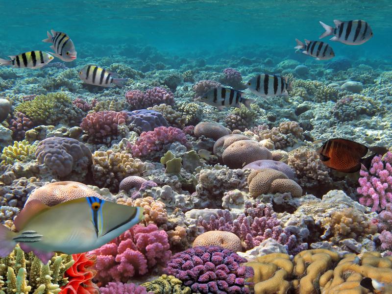 La vista che puoi godere dall'incredibile bar subacque made in Israele!