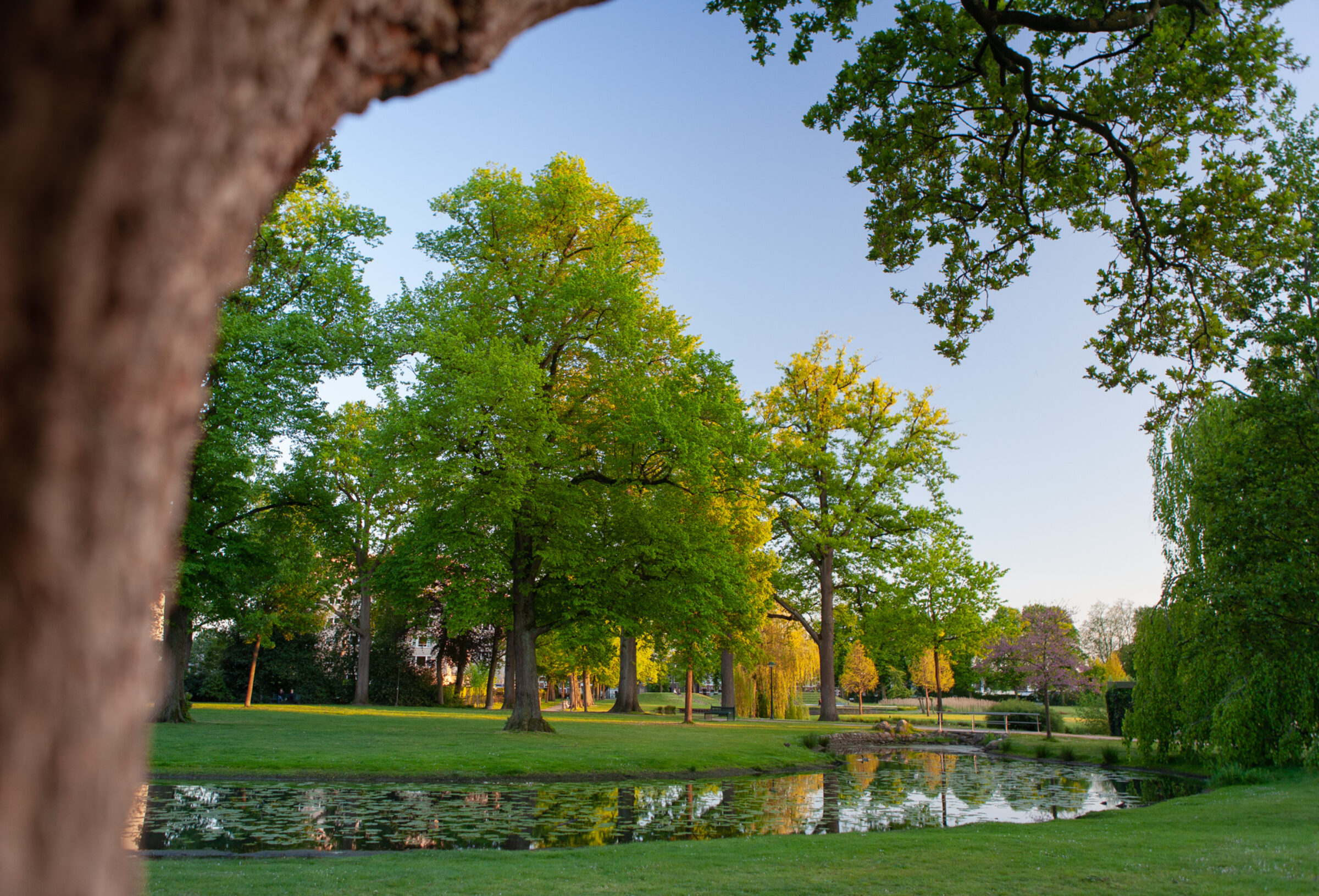 Frühling im Volkspark