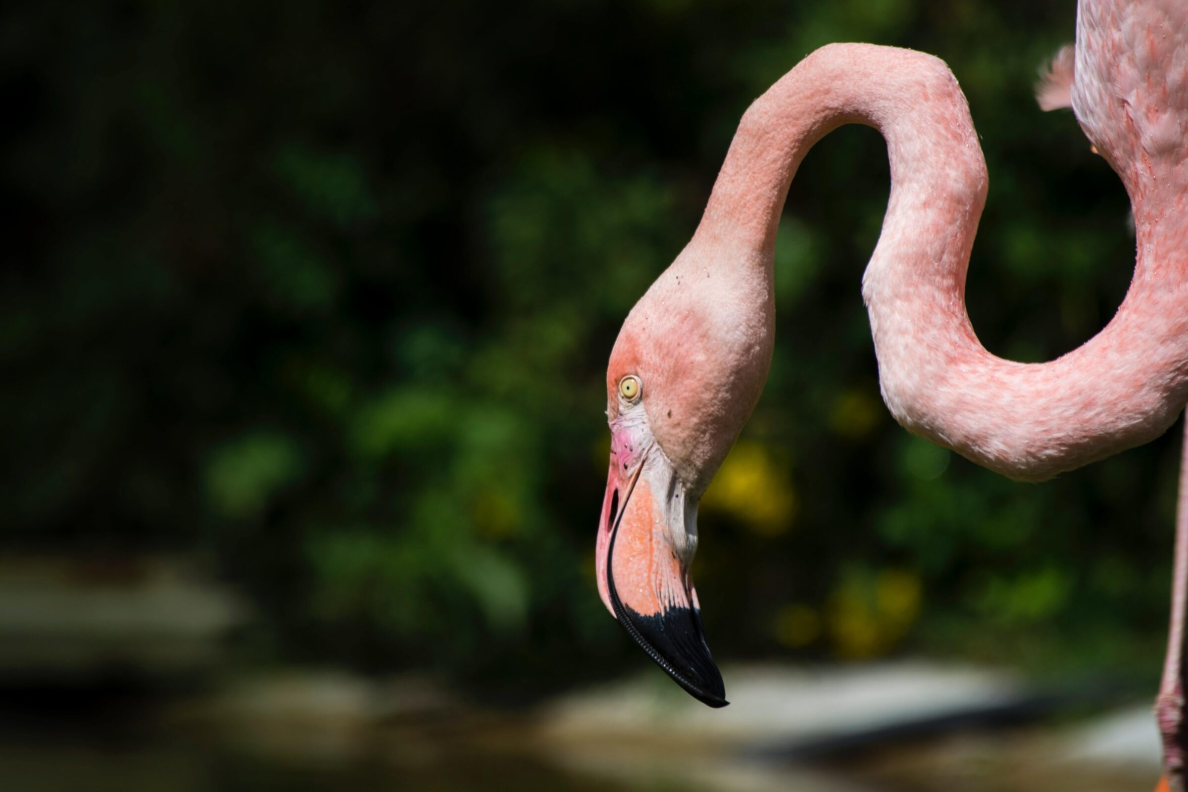 Flamingo flamingoroute