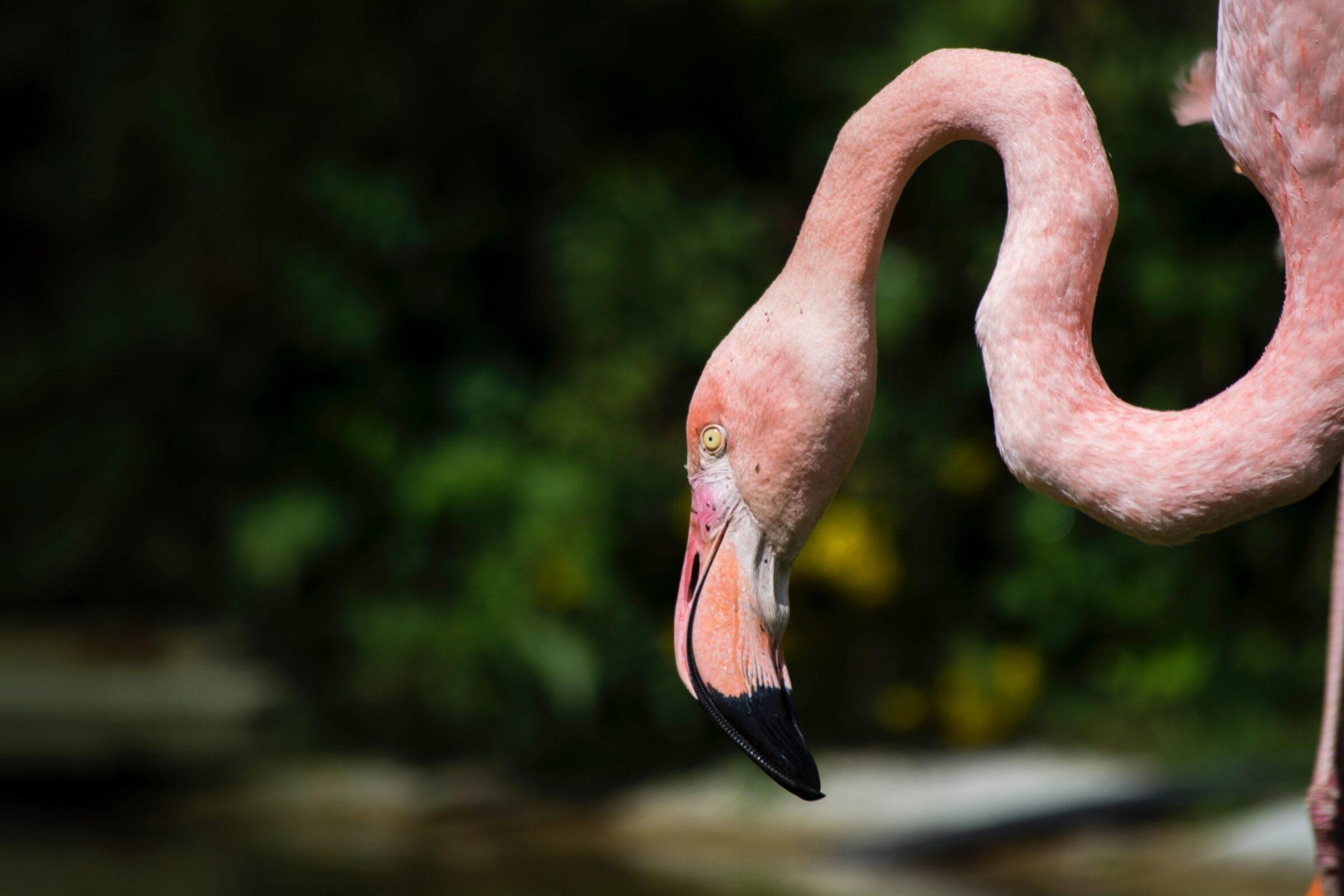 Flamingo flamingoroute