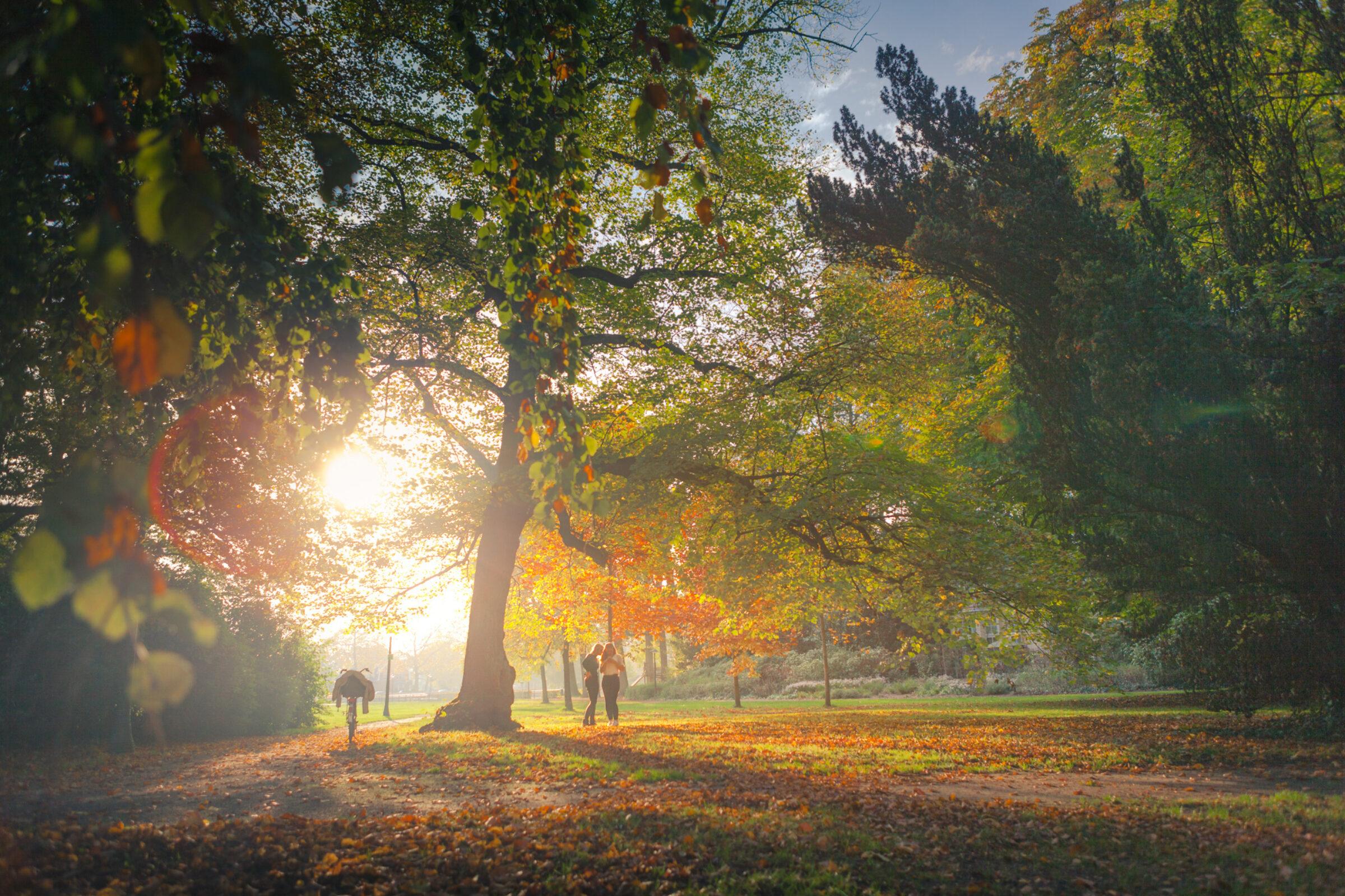 Herfst stadspark Enschede