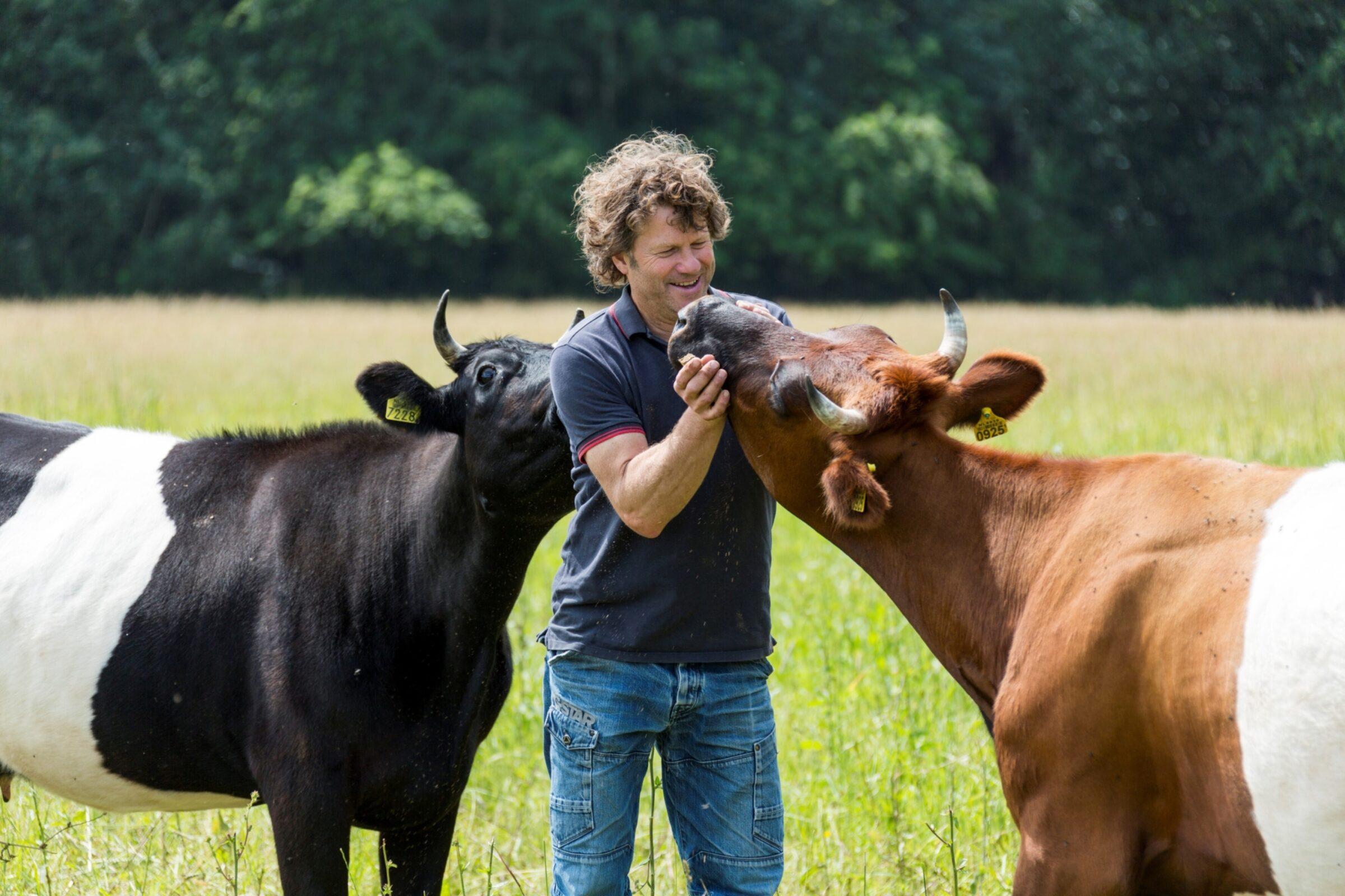 Koeien van Jelle