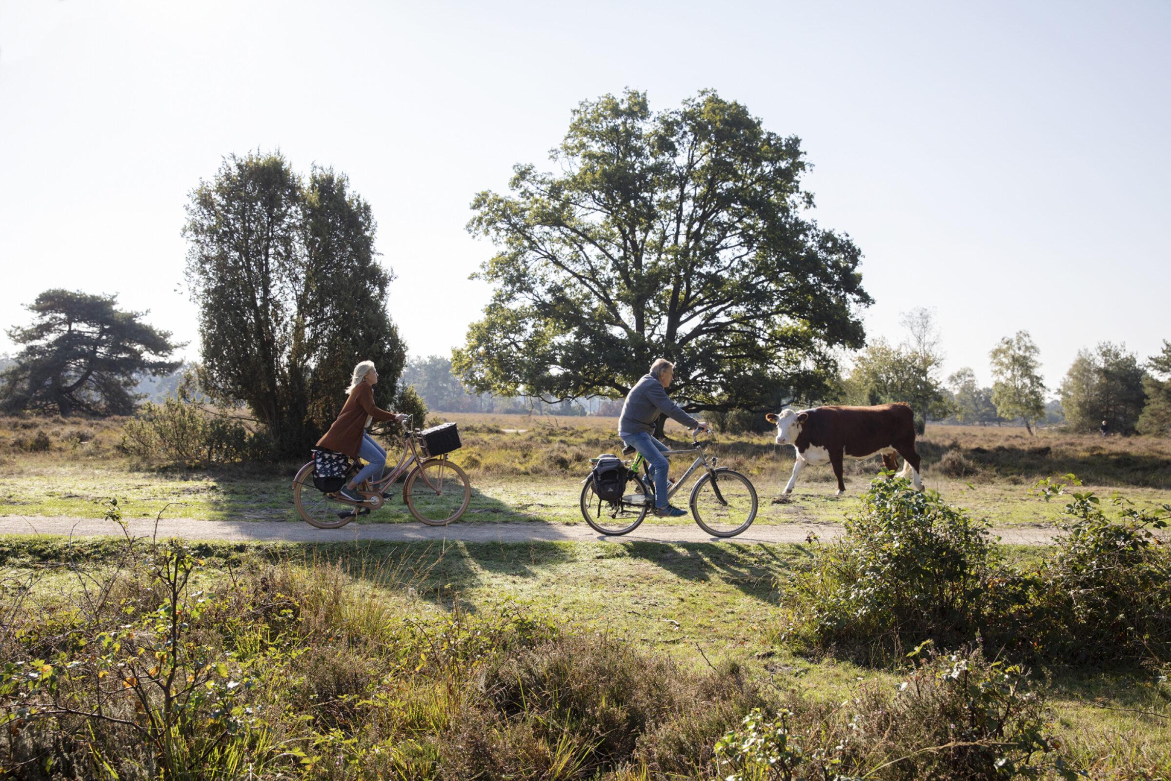 fahrrad fahren enschede buursezand