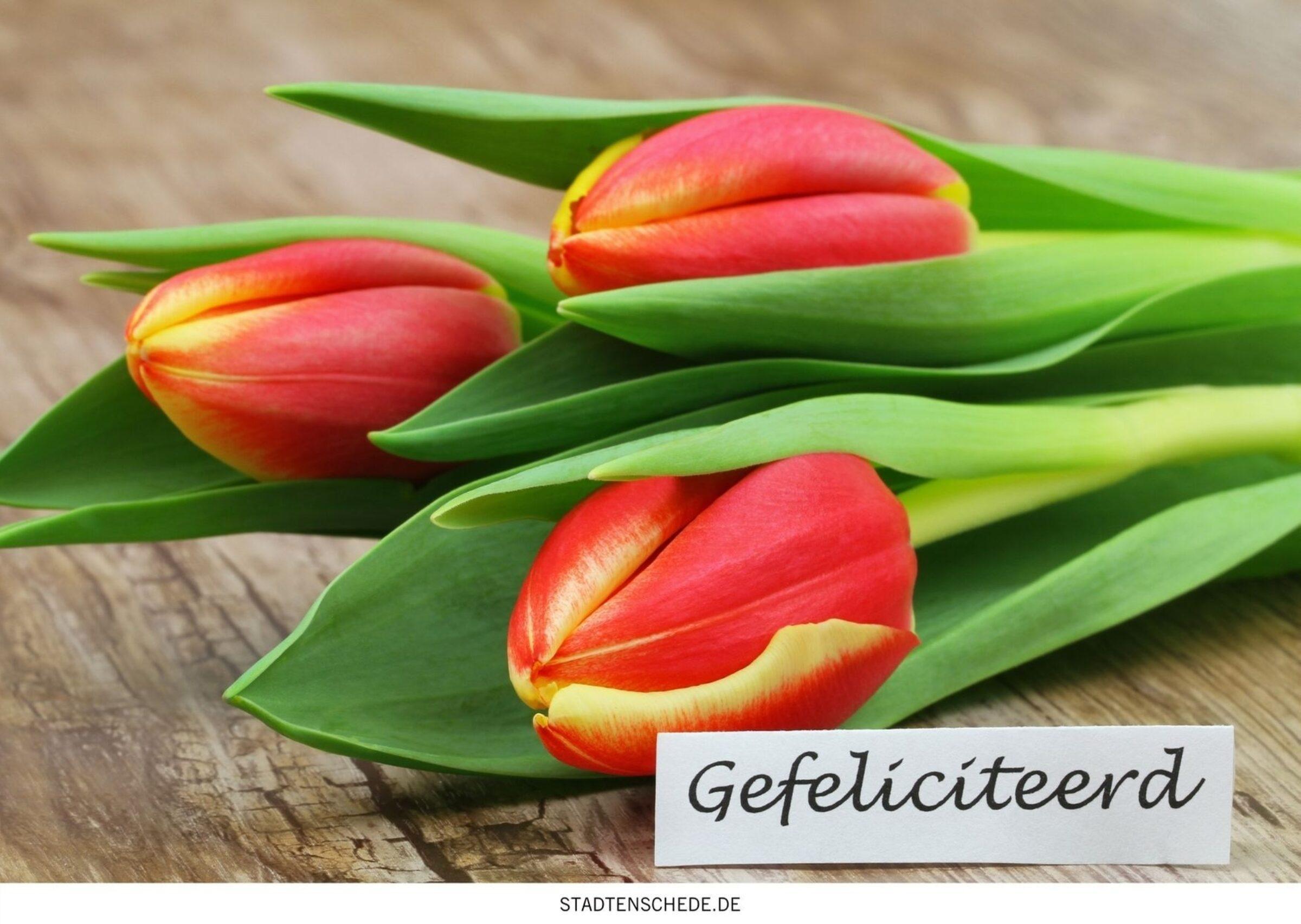 herzlichen glückwunsch auf niederländisch