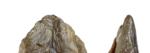 Een Neanderthaler Die Zijn Zakmes Verloor 1706 1542016223