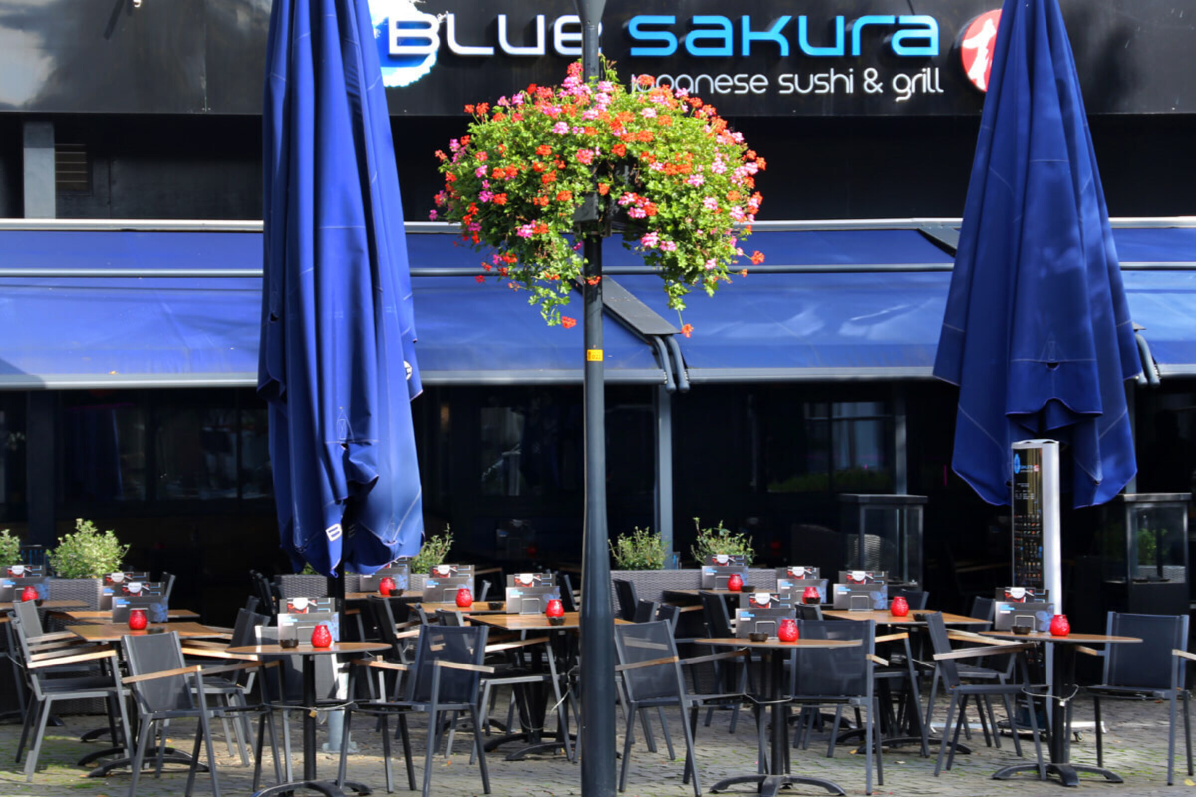 Blue sakura Enschede3