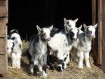 kinderboerderij wesseler enschede