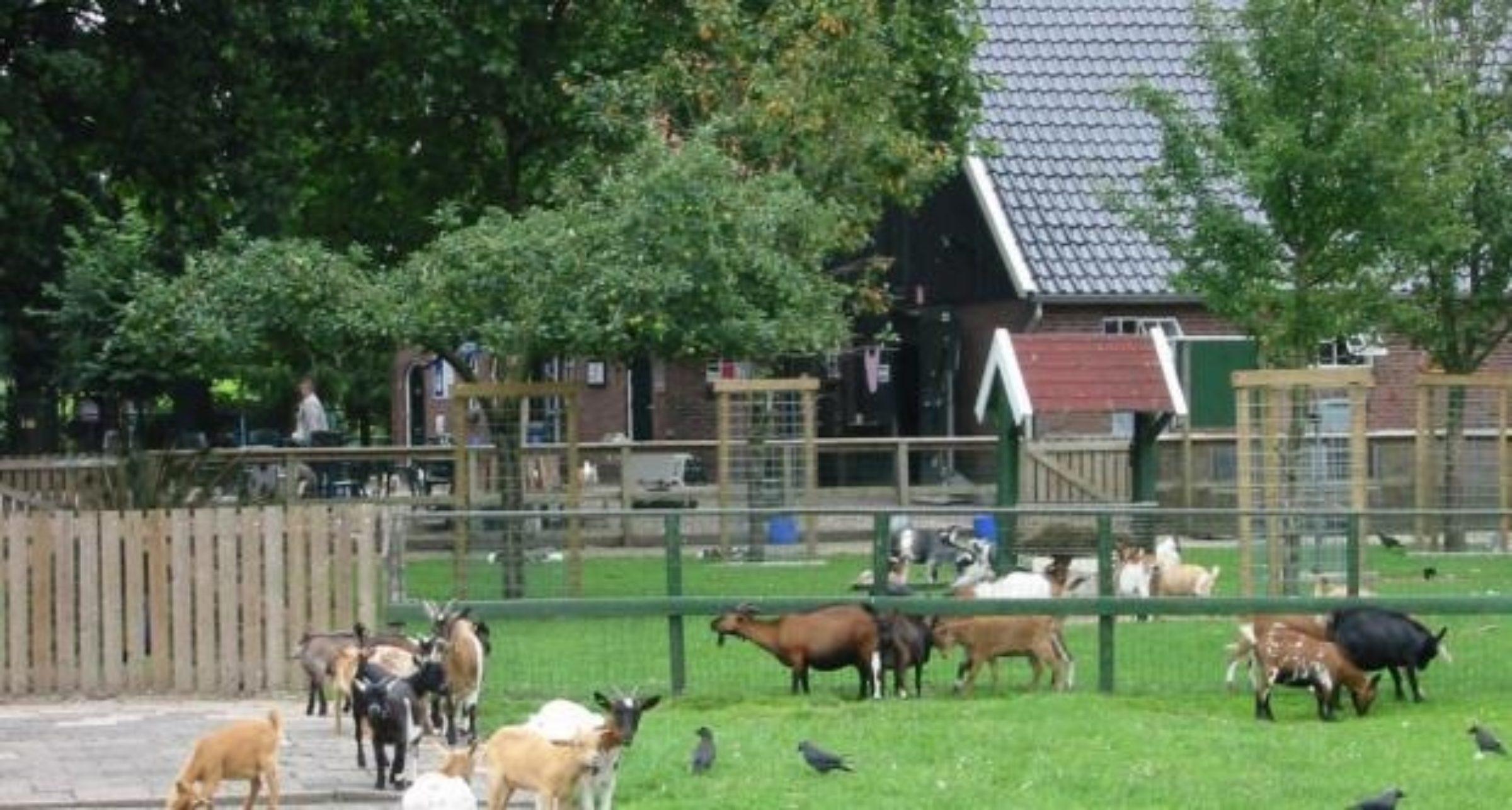 Kinderboerderij noord enschede