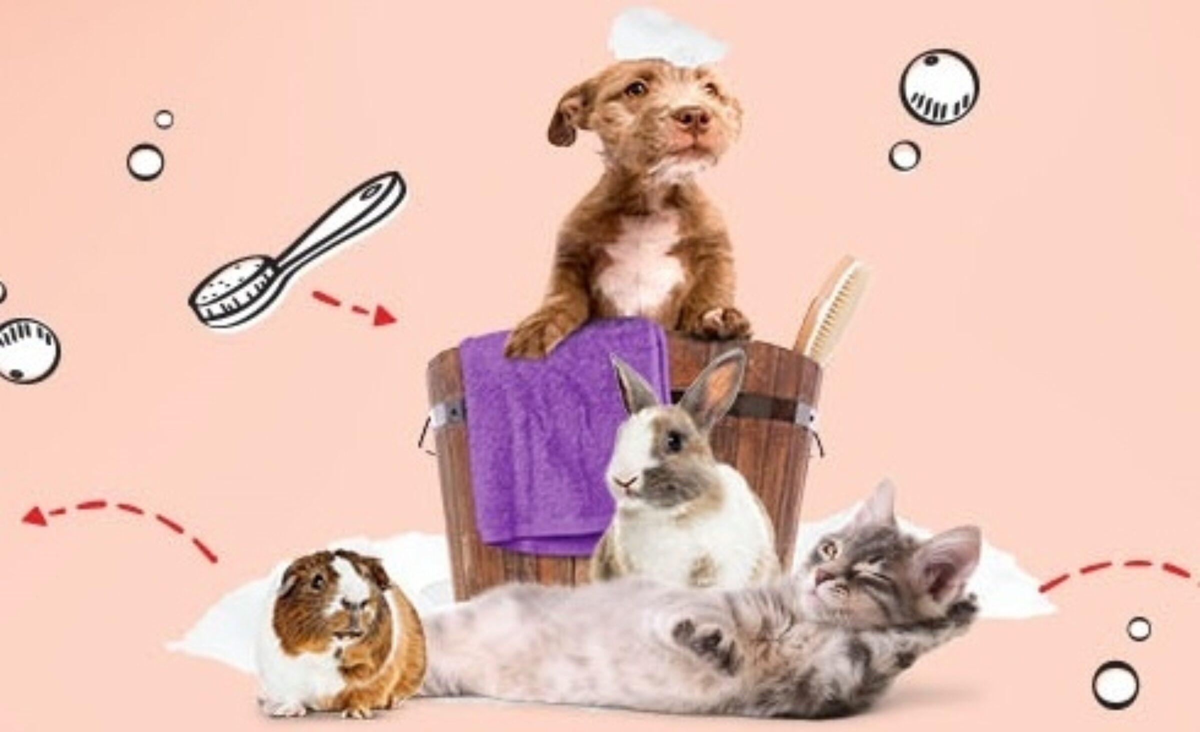 Pets Place Enschede