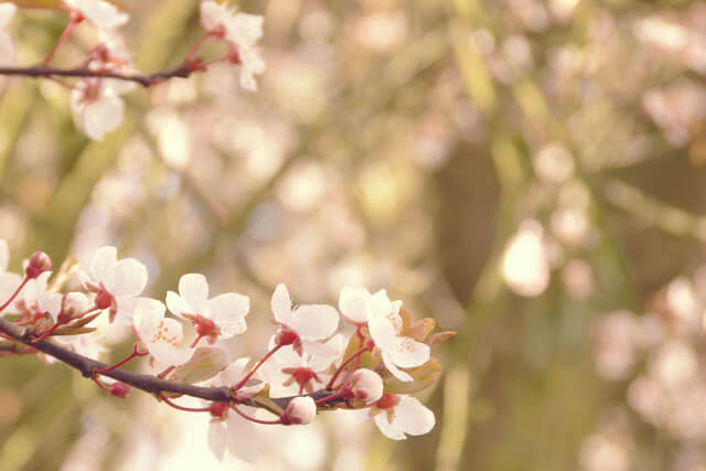 In photos: Spring blossoms in the UK