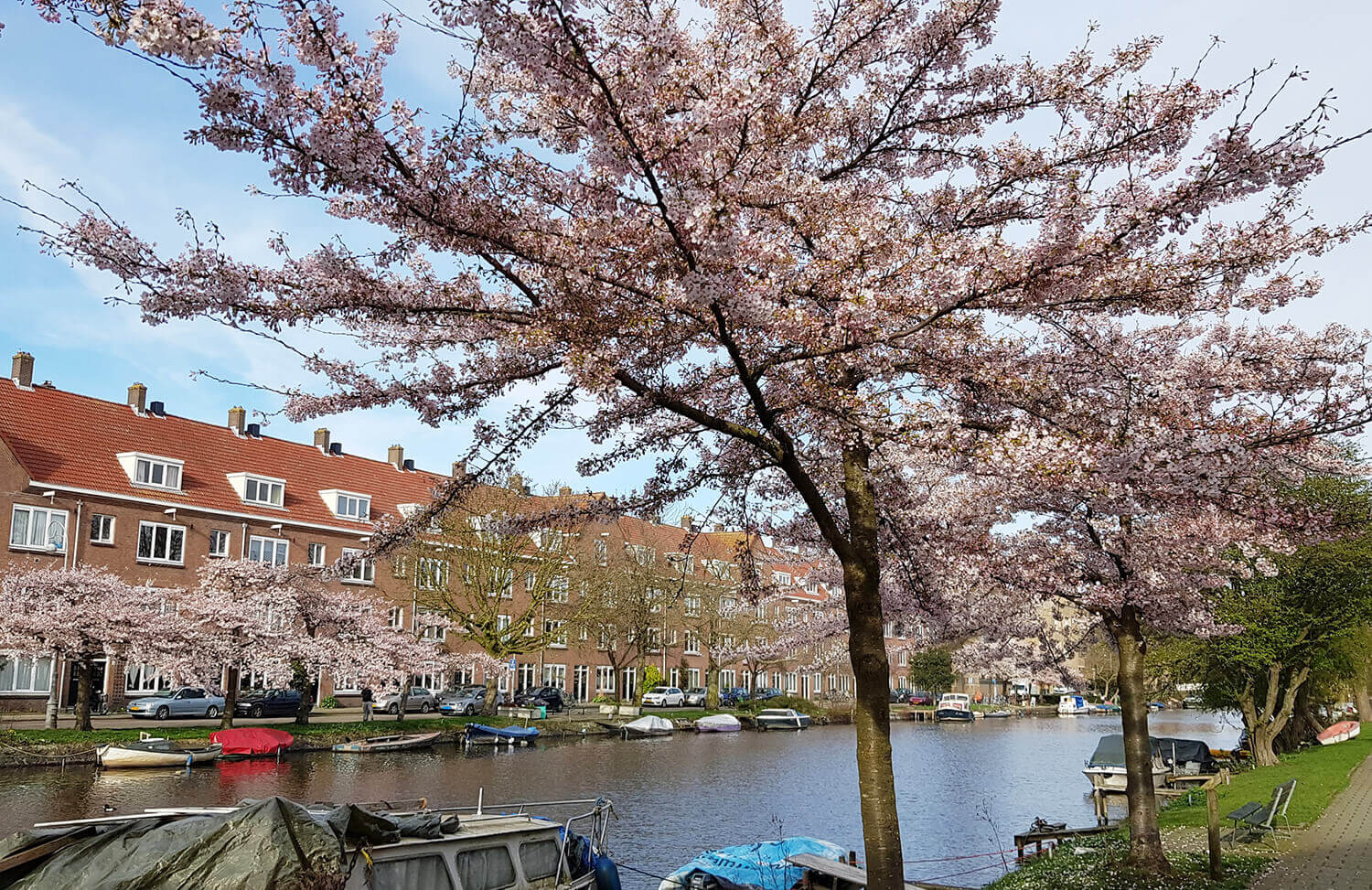 Amsterdam Travel: Where to Find Cherry Blossom in Amsterdam : As the Bird  flies... Travel, Writing, and Other Journeys