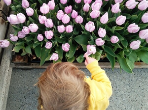 Amsterdam Travel: Tips for Seeing Tulips in Amsterdam