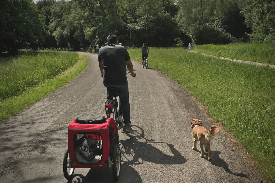 Amsterdam Travel: Things to Do With Dogs in Amsterdam