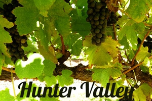 in photos:Exploring hunter valley