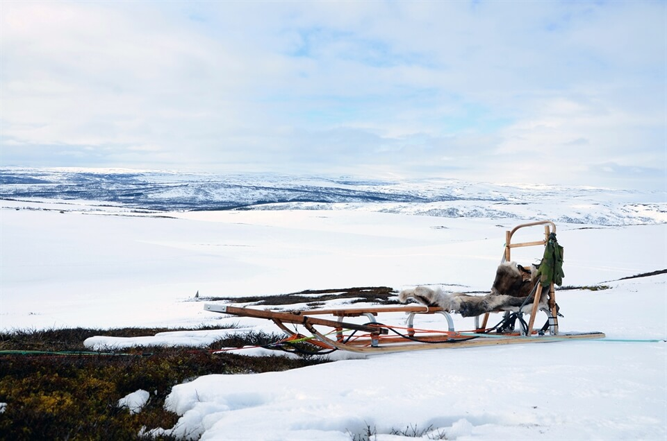 A Reader's Story: Dog-Sledding in Norway