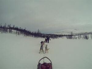 Dog-Mushing Tour in Northern Norway - Chapter One: What is dog mushing anyway?