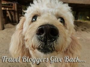 Give it back... Lanta Animal Welfare