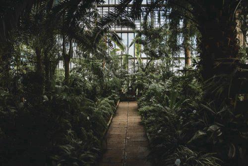 Das Innere eines alten Gewächshauses mit exotischen Pflanzen und hölzernen Fensterrahmen.