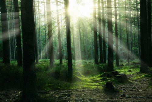 Sonnenlicht bricht durch das Laub der Bäume und blendet den Betrachtenden