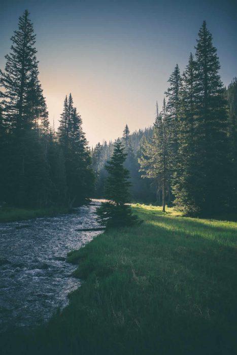 Ein kleiner Fluss fließt durch einen Wald, vorbei an grünen Wiesen.