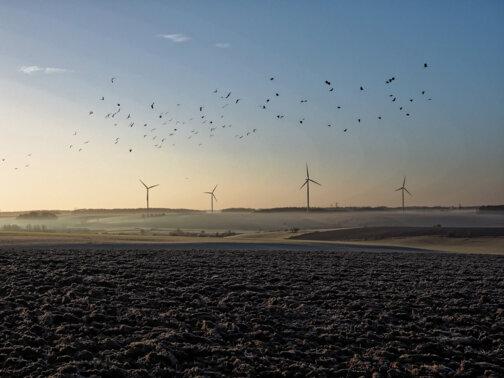 Eoliennes et oiseaux en Hiver Ardennes Thiérache