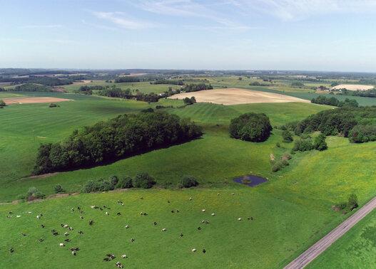 Ardennes Thierache vue du ciel campagne vaches