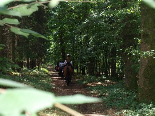 Ardennes Thierache