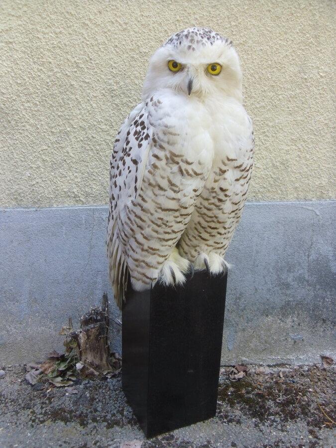 Vente Prestigieuses collections de taxidermie (oiseaux, mammifères)  chez Mirabaud-Mercier  : 266 lots